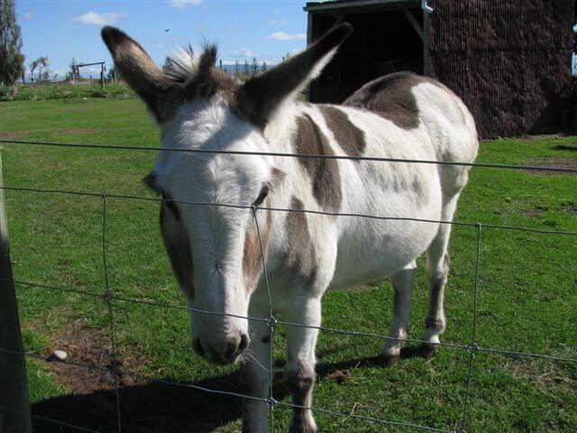1.pedro-the-donkey.jpg