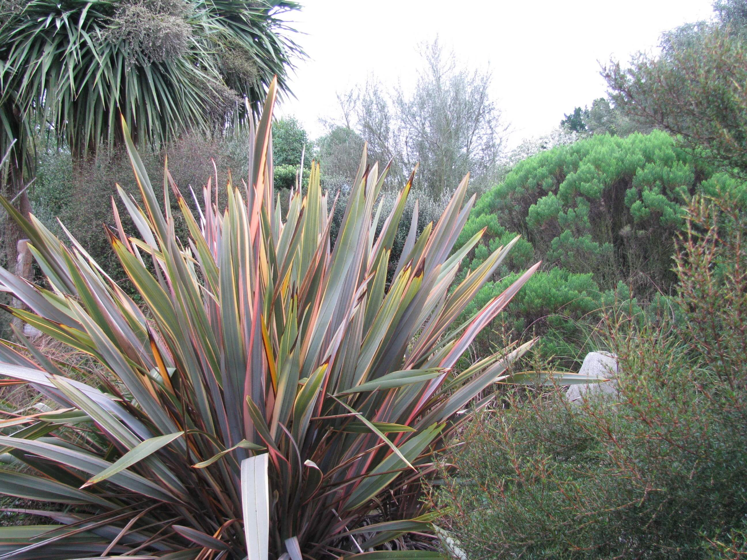 5.phormium-tenax-flax.jpg
